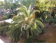 jardin actuel Opti